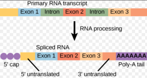 Introns and Exons