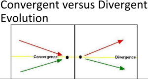 Convergent Vs Divergent Evolution