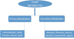 PRIMARY VS SECONDARY METABOLITES