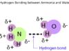 Hydrogen Bonding In Ammonia