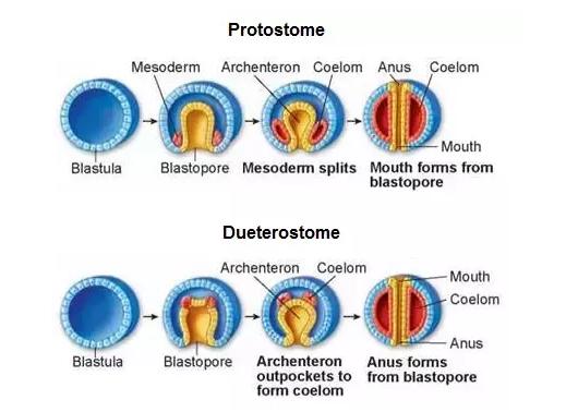 a papillomatosis összefűzi a reticularist a tej és a hús fertőtlenítése
