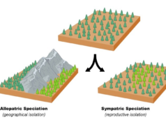 Allopatric-Vs-Sympatric-Speciation