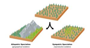 Allopatric-Vs-Sympatric-Speciation