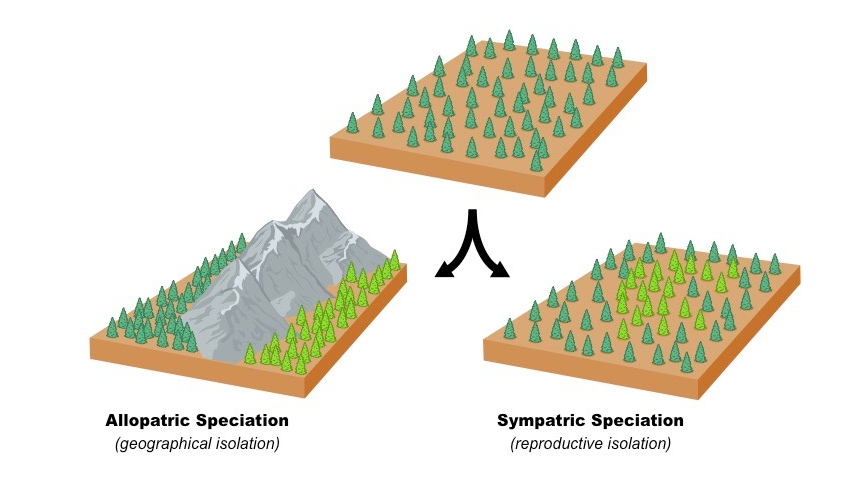 Allopatric Speciation Vs  Sympatric Speciation  Examples