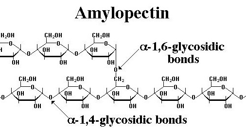 Structure-Of-Amylopectin